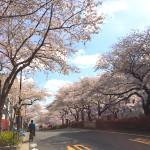 桜が満開&嬉しいメールをいただきました
