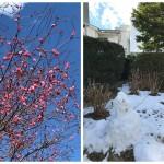 春用のチラシの打ち合わせ