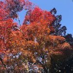秋の色を感じる