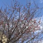 春の足音が聞こえてます